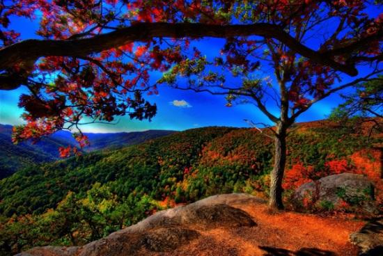 wallpaper hutan indah