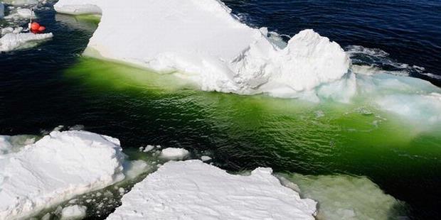 kolam hijau di kutub selatan